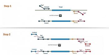 Imagen: El proceso de amplificación de dos pasos involucrado en la Amplificación Múltiplex de Objetivos Específicos para la tecnología de análisis por Resecuenciación (MASTR) (Imagen cortesía de Multiplicom).