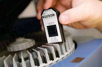 Imagen: Un microarray de cADN en un chip para la detección rápida de la fiebre del dengue (Fotografía cortesía de Investigación y Desarrollo).