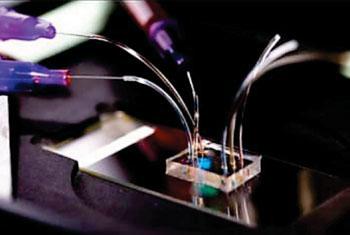Imagen: El dispositivo de microfluidos para determinar los patrones de movilidad de los neutrófilos (Fotografía cortesía del Centro de Recursos BioMEMS, Hospital General de Massachusetts.