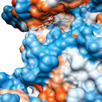 Imagen: El erlotinib unido al EGRF, con una resolución de 0,26 nm; el color de la superficie indica hidrofobicidad (Fotografía cortesía de Wikimedia Commons).