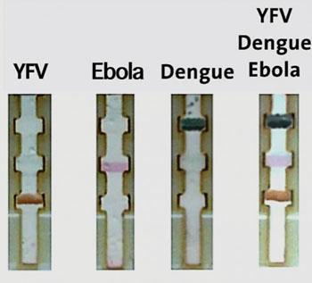 Imagen: La prueba en una tira de papel diferencia el Ébola, el dengue y la fiebre amarilla (Fotografía cortesía del Dr. Chun-Wan Yen).