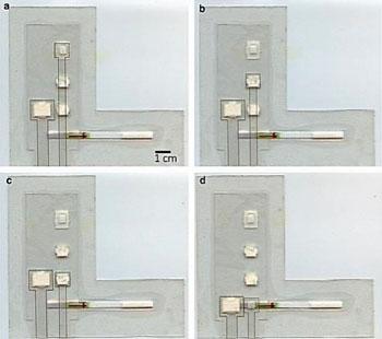 Imagen: El dispositivo de papel y plástico combina la amplificación isotérmica y el flujo lateral para detectar la malaria (Fotografía cortesía de la Universidad de Rice).