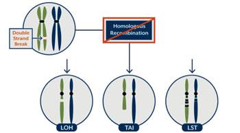 Imagen: Un diagrama de los tres biomarcadores del ensayo myChoice para la deficiencia de recombinación homóloga (HRD) (Fotografía cortesía de Myriad Genetics).