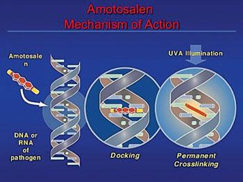 Imagen: Un diagrama de la combinación de amotosaleno e iluminación UVA para la eliminación de agentes patógenos de la sangre donada para transfusiones (Magdy El Ekiaby, MD).